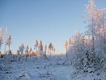 [写真]マイナス17度の雪景色