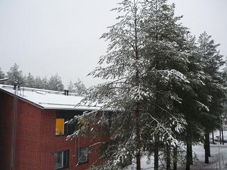 [写真]雪がかぶった木