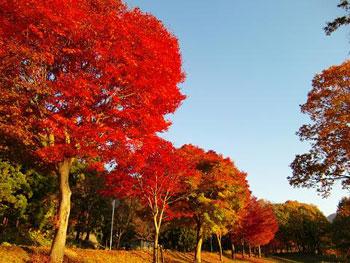 [写真]紅葉している木々