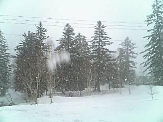 [写真]濡れ雪