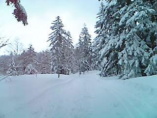 [写真]新雪
