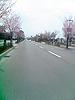 [写真]桜並木