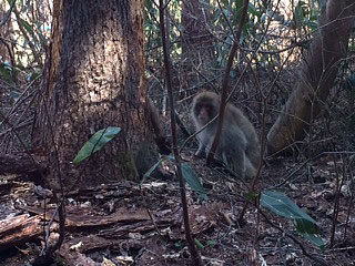 [写真]野生の猿