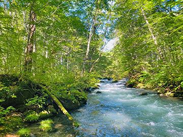 [写真]岩手から青森へ移動、奥入瀬渓流を観光