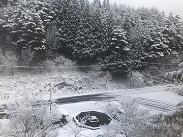 [写真]一晩で雪が積もりました
