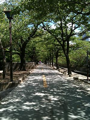 [写真]桜並木の木陰