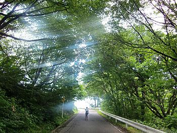 [写真]トレーニング中の太田渉子選手と木陰から光のシャワー