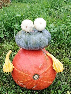 [写真]たぶんカエルを模したかぼちゃ