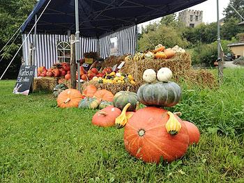 [写真]可愛いかぼちゃたち