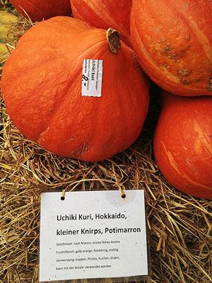 [写真]かぼちゃについているラベルに北海道の文字