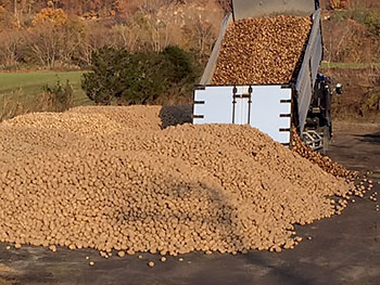 [写真]収穫されたたくさんの男爵芋がトラックからおろされる