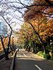 [写真]紅葉のジョギングコース