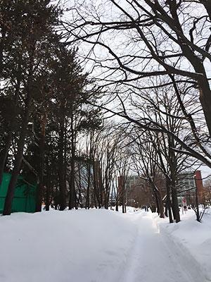 [写真]札幌大学正門前の雪の積もった道