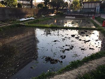 [写真]親水公園の田んぼ