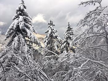 [写真]旭岳へ向かう車窓からの雪の積もった木々の風景