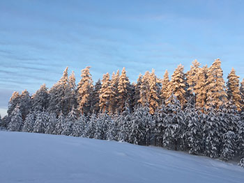 [写真]木も大地も凍っています