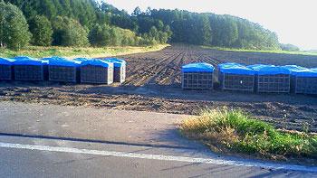 [写真]畑に並ぶたまねぎの入った箱