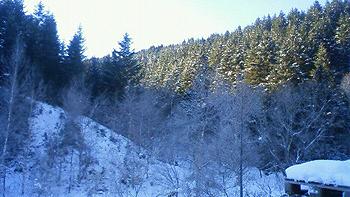 [写真]樹氷