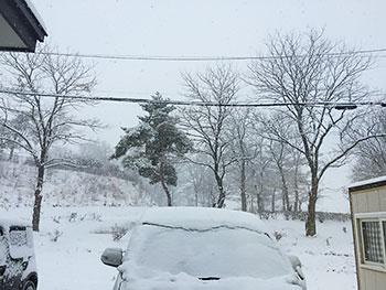 [写真]降り積もる雪