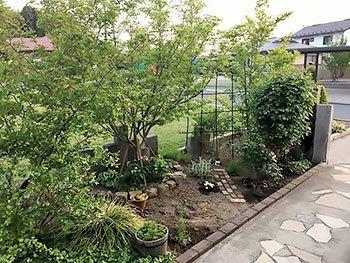 [写真]ジュンベリー・シャラの木、バラ、他のある庭