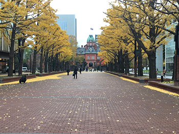 [写真]北海道庁 旧本庁舎前イチョウ並木