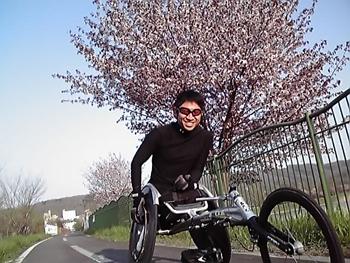 [写真]サイクリングロードの桜