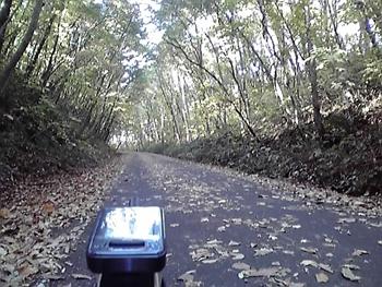 [写真]林の中を走る
