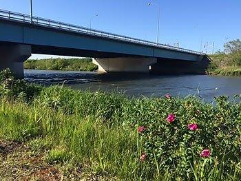 [写真]川と河川敷に咲く花