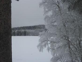 [写真]凍った枝の様子
