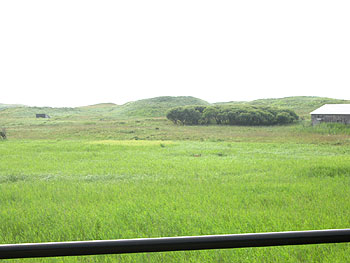 [写真]大平原の様子