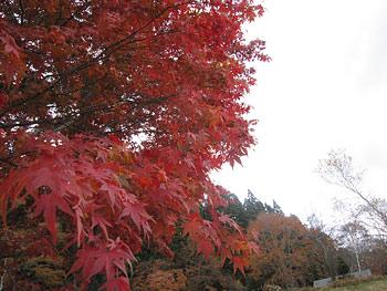 [写真]紅葉