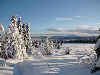 [写真]雪景色