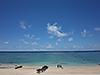 [写真]奄美大島のビーチ