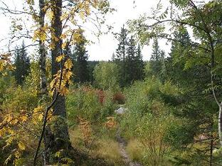 [写真]秋のハイキングコース